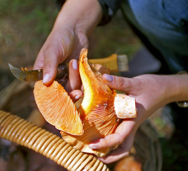 MushroomsCutting