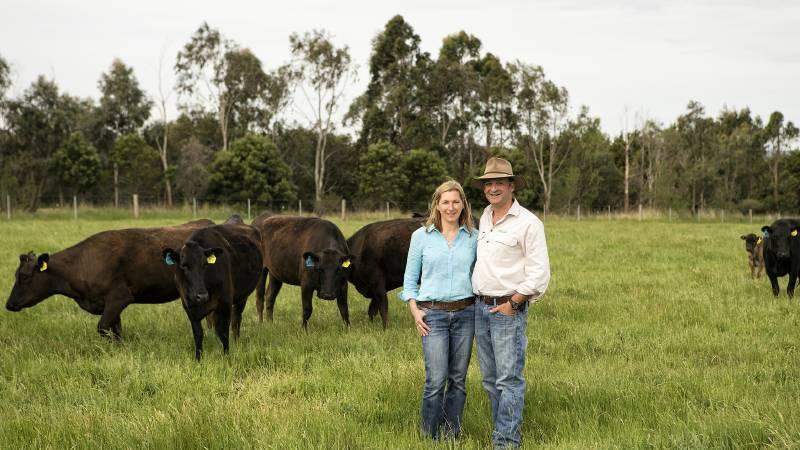 "Vicki and Nick Sher,""Glen Leckie"" at Ballan, near Ballarat, with Wagyu cows. (Image: The Land)"